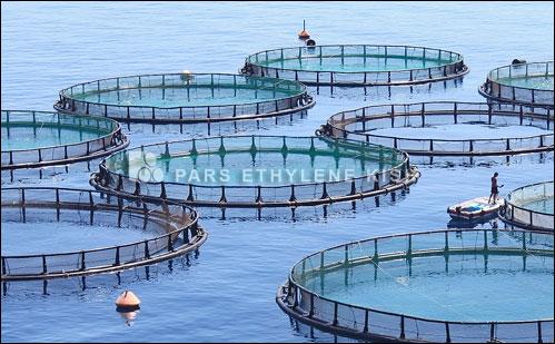 مزرعه پلی اتیلن پرورش ماهی