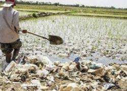 آبیاری مزارع سبزی و صيفيجات با فاضلاب