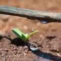 آبیاری قطره ای برای مبتدیان