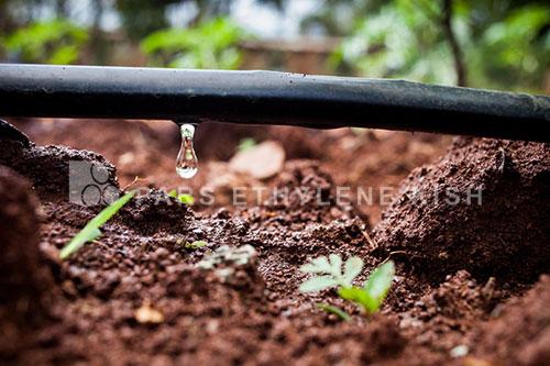 سیستمهای آبیاری قطره ای